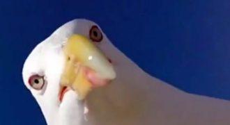 Γλάρος κλέβει κάμερα και βγάζει selfies