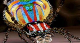 Αυτά είναι τα νέα είδη ζώων που ανακαλύφθηκαν μόλις πριν ένα χρόνο
