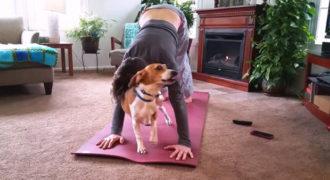Γάτες και σκύλοι που δεν συμφωνούν με την Yoga (Video)