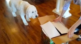 Έδωσαν στο σκύλο ένα κουτί με δώρο έκπληξη για τα γενέθλια του. Αυτό που είχε μέσα; Δε θα το πιστεύετε!