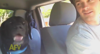 To αφεντικό του τον ρωτά αν θέλει να πάνε βόλτα στο πάρκο. Δείτε τώρα την αντίδραση του σκύλου!