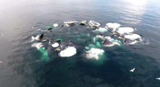 Παρατήρησαν ένα τεράστιο κύκλο να αφρίζει πάνω στη θάλασσα. Όταν είδαν τι ήταν από κάτω έμειναν έκπληκτοι!