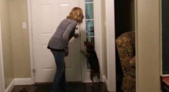 Ένας άντρας έλειπε από το σπίτι του 2 χρόνια. Τι έγινε όταν τον είδε ο σκύλος του; Κάτι πολύ συγκινητικό… (Βίντεο)