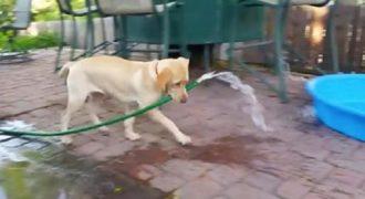 Αυτός ο σκύλος κουράστηκε από την ζέστη και πήρε την κατάσταση στα πόδια του. (Βίντεο)