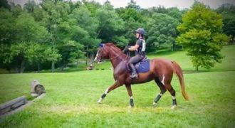 Η ξεκαρδιστική αντίδραση που είχε αυτό το άλογο συναντώντας ένα μικρό εμπόδιο. (Βίντεο)