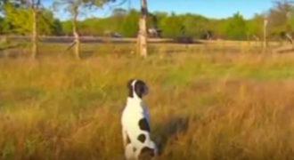 Αυτός ο σκύλος περίμενε τον άνθρωπο του να έρθει για 5 ολόκληρους μήνες. Ο λόγος είναι απίστευτα συγκινητικός!