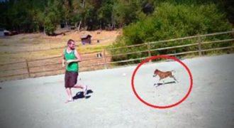 Ξεκίνησε να τρέχει και δεν περίμενε ότι ένα αλογάκι μόλις 3 ημερών θα τον ακολουθούσε.