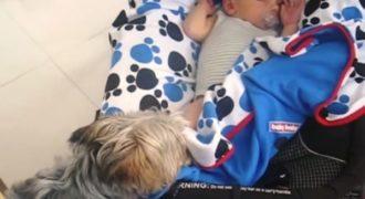 Η αφεντικίνα την έπιασε να κάνει κάτι περίεργο στο μωρό. Δείτε με τα μάτια της τι κάνει η μικρή σκυλίτσα!
