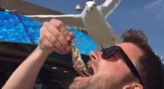 Αυτο είναι που λεμε «του πήρε τη μπουκιά απ» το στόμα». Δείτε πως του παίρνει το φαγητό αυτό το πουλί.