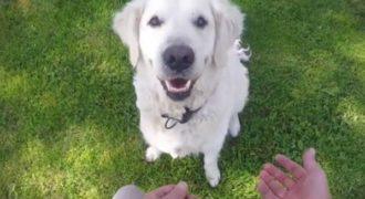 Ταχυδακτυλουργός κρύβει τα μπισκότα από σκύλους και καταγράφει τις φοβερές αντιδράσεις τους!