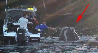 Φάλαινα πλησιάζει μια βάρκα με ψαράδες για να ζητήσει την βοήθεια τους.
