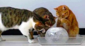10 γάτες ανακάλυψαν ένα μεγάλο παγάκι. Αυτό που θα κάνουν με αυτό θα σας κάνει να χαμογελάσετε!