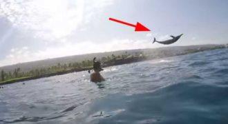 Ένα άγριο δελφίνι κάνει επίδειξη ικανοτήτων σε ζευγάρι που το βιντεοσκοπεί!