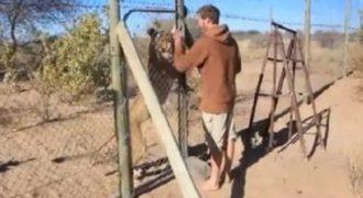 ΒΙΝΤΕΟ: Δεν θα πιστεύετε τι γίνεται όταν το λιοντάρι βγαίνει από το κλουβί!