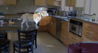 Αυτό που κάνει αυτός ο σκύλος όταν οι ιδιοκτήτες του λείπουν από το σπίτι είναι πανέξυπνο!