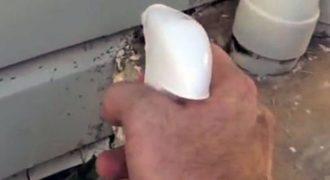 Δείτε πως θα ξεφορτωθείτε τα μυρμήγκια με φυσικό τρόπο! (Βίντεο)