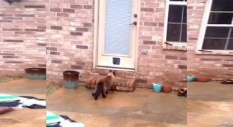 Προσπάθησε να φτιάξει μια πόρτα για τη γάτα του. Δείτε όμως τι έκανε!