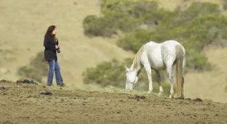 Θαρραλέα φωτογράφος πλησιάζει άγρια άλογα και δείχνει πώς ζουν ελεύθερα στη φύση!