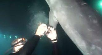 Ένα τραυματισμένο δελφίνι πλησίασε έναν δύτη για βοήθεια – Η συνέχεια συγκλονιστική… (video)
