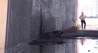Η εκπληκτική διάσωση ενός σκύλου που ζούσε κάτω από μια γέφυρα σε ένα κανάλι
