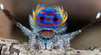 Νομίζετε πως είναι μια συνηθισμένη αράχνη; Για κοιτάξτε καλύτερα…