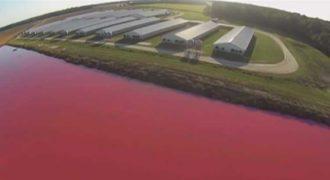 Ανησυχητικές εναέριες φωτογραφίες δείχνουν τι προκαλεί στο περιβάλλον η αλόγιστη θανάτωση ζώων για το κρέας τους
