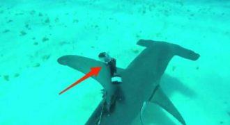 Ένας δύτης ενσωμάτωσε μια κάμερα πάνω σε έναν καρχαρία και κατέγραψε κάτι τρελό!
