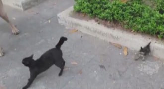 Γιγάντιος σκύλος επιτίθεται σε μικρό γατάκι. Δείτε την αντίδραση της μαμάς του!