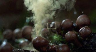 Το καλύτερο βίντεο για τη φύση που θα δείτε ποτέ σας!