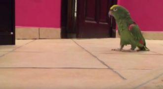 Πολύ γέλιο: Δεν έχετε ξαναδεί πιο… σατανικό παπαγάλο! (Βίντεο)