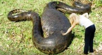 Αυτά είναι τα μεγαλύτερα φίδια που βρέθηκαν ποτέ ζωντανά … [video]