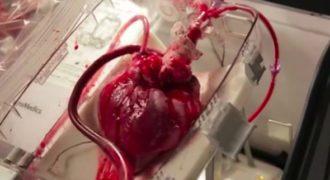 Απίστευτο βίντεο δείχνει πλήρως λειτουργική καρδιά να χτυπά ΕΞΩ από το ανθρώπινο σώμα!