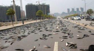 Ψάρια ολοζώντανα έπεσαν από τον ουρανό στο έδαφος μετά από μια νεροποντή. Αυτό το ασυνήθιστο φαινόμενο έχει παρατηρηθεί στην Ονδούρα κατ' επανάληψη