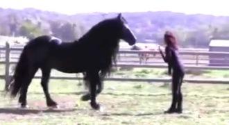 Αυτό το άλογο είναι πραγματικά από τα πιο μεγαλοπρεπή που έχετε δει!