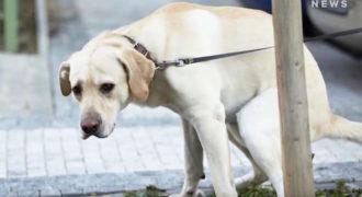 Γιατί τα σκυλιά περιστρέφονται πριν κάνουν την ανάγκη τους;
