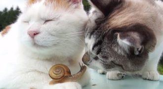 Μία ασυνήθιστη φιλία! Δύο γάτες κάνουν παρέα με ένα… σαλιγκάρι!