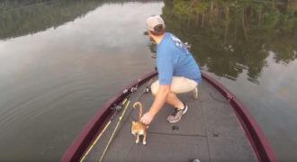 Ένα γατάκι κολυμπούσε μόνο του στη μέση της λίμνης. Δείτε τι γίνεται όταν πλησιάζει τη βάρκα τους!
