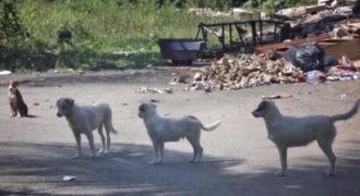 Το πρόγραμμα Sato διασώζει εγκαταλελειμμένους σκύλους και τους βρίσκει σπίτι για πάντα!