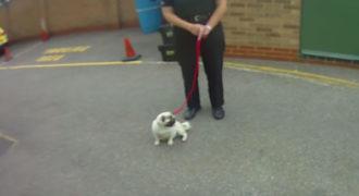 Η αντίδραση ενός κλεμμένου σκύλου όταν επιστρέφεται στην ιδιοκτήτρια του!