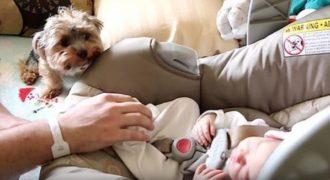 Ένα νεογέννητο μωράκι και ένα σκυλάκι ράτσας Yorkie συναντιούνται για πρώτη φορά!