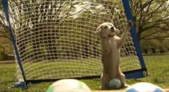 Το κουτάβι του έπιανε τη μπάλα με τις δύο πατούσες. Kαι κατέκτησε βραβείο Γκίνες!