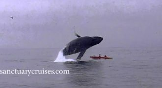 Φάλαινα 40 τόνων προσγειώθηκε σε κανό!