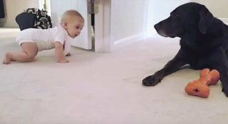 Αυτή η μικρούλα ετοιμάζεται να μπουσουλίσει για πρώτη φορά. Δείτε όμως την αντίδραση του σκύλου!