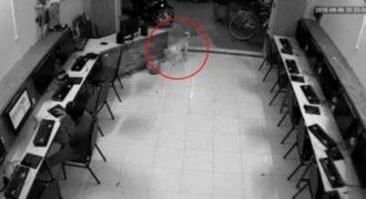 Το κάρμα εκδικείται αυτόν τον άντρα που προσπαθεί να χτυπήσει με κλωτσιά ένα σκύλο.