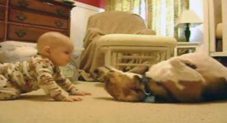 Σκύλος συναντά μωρό για πρώτη φορά (και…λιώνει)