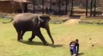VIDEO: Ελέφαντας Υπερασπίζεται τον Φροντιστή του όταν του επιτέθηκε ένας …