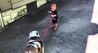 Αποφασισμένο μωρό θέλει να πάει βόλτα τον σκύλο του. Το μπουλντόγκ όμως έχει άλλη άποψη.
