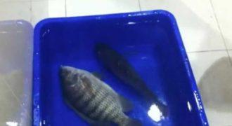 Ρίχνουν κατεψυγμένα ψάρια στο νερό και αυτά επανέρχονται ξανά στην ζωή!