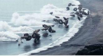Πώς οι Αμερικανοί πεζοναύτες κάνουν σήμερα απόβαση σε μια εχθρική παραλία