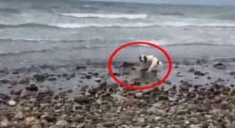 Σκύλος έσωσε… δελφίνι που ξεψυχούσε σε παραλία! (Βίντεο)